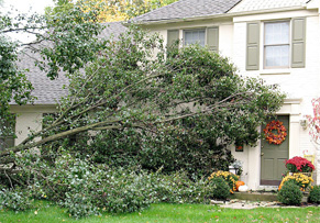 Trees You Should Never Plant in Your Yard Img